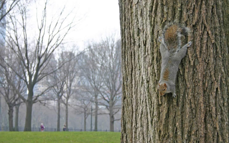 Animated squirrel szex exposed download