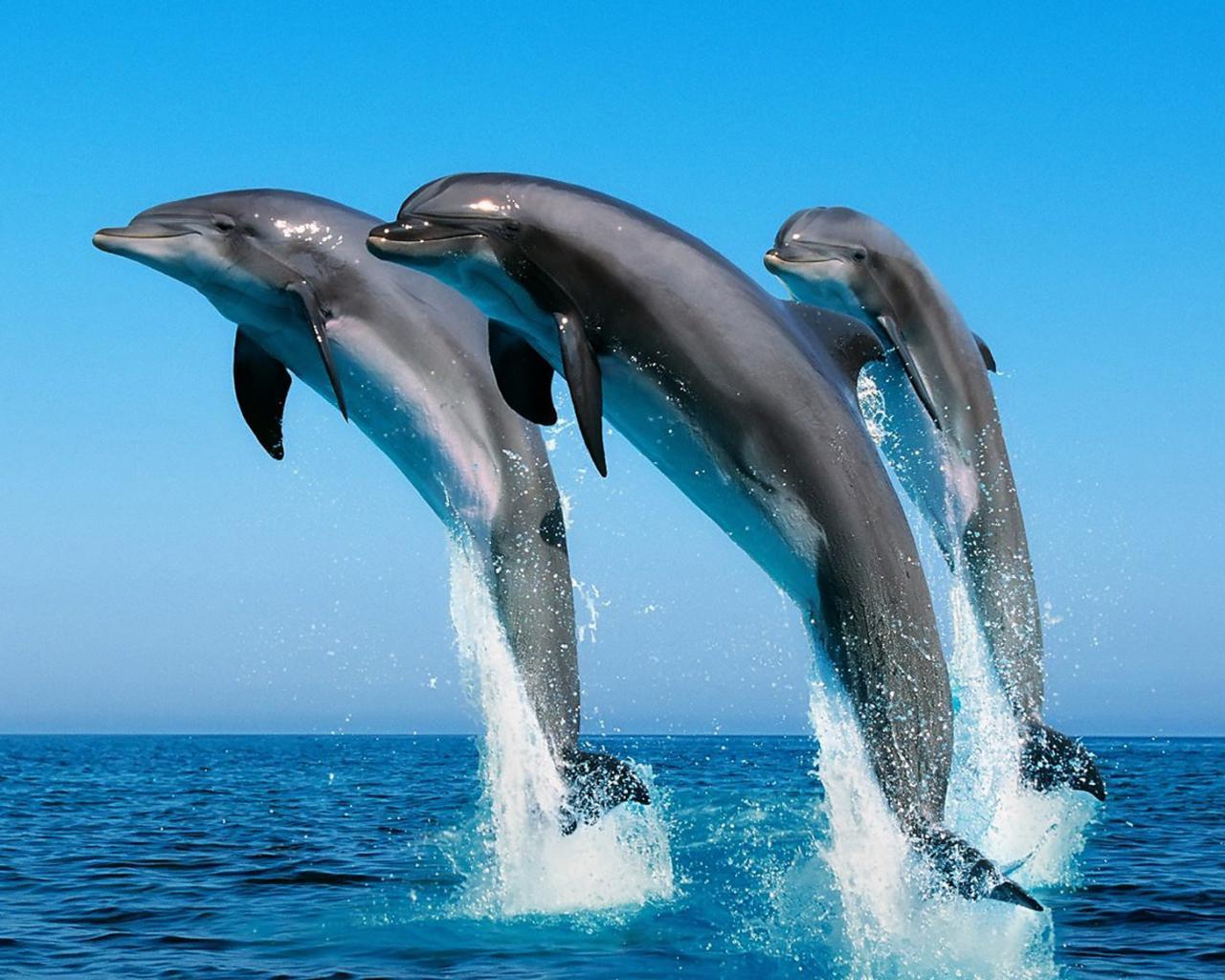 Под водой дельфины море синее 1600х1200
