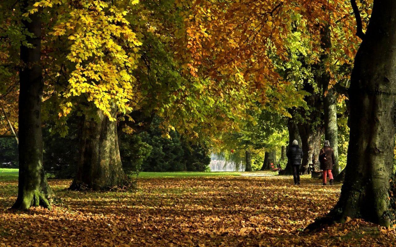 скачать фильмы про осень: