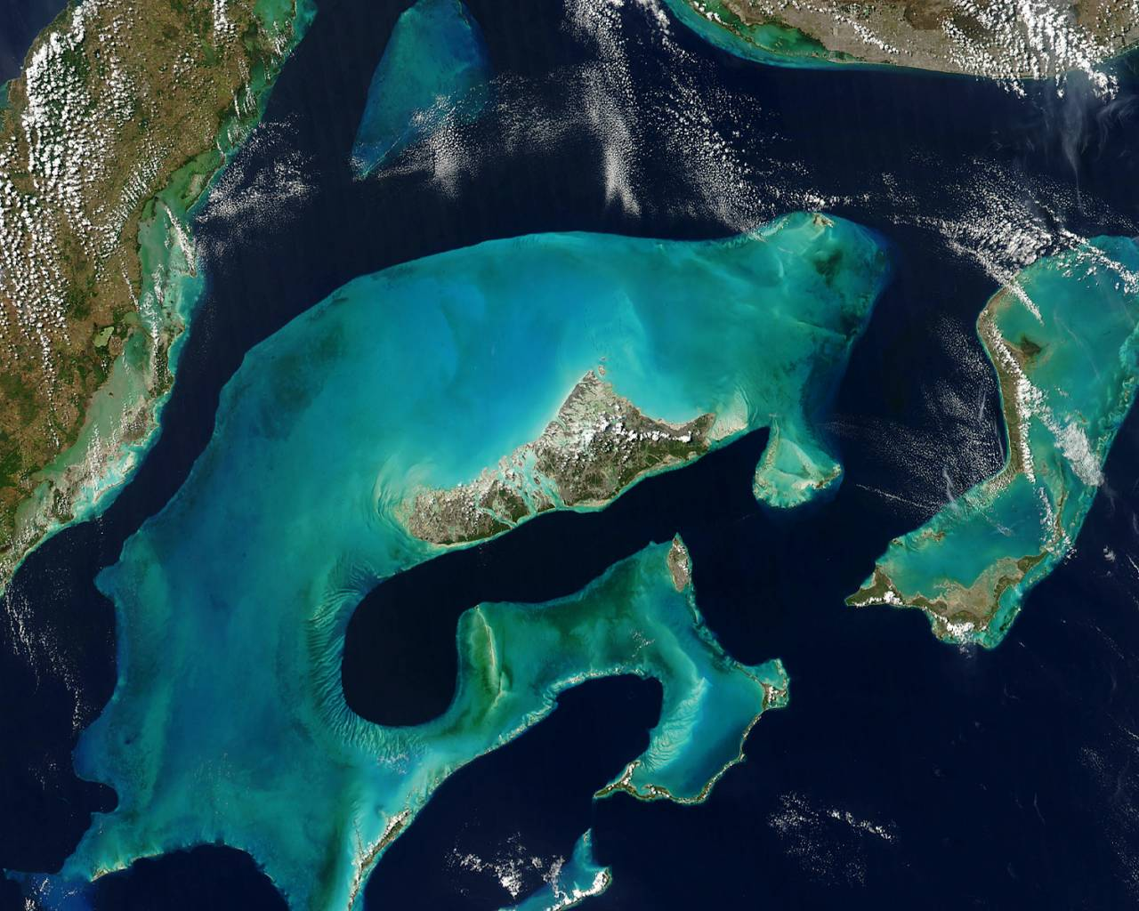 планктон фото с названиями