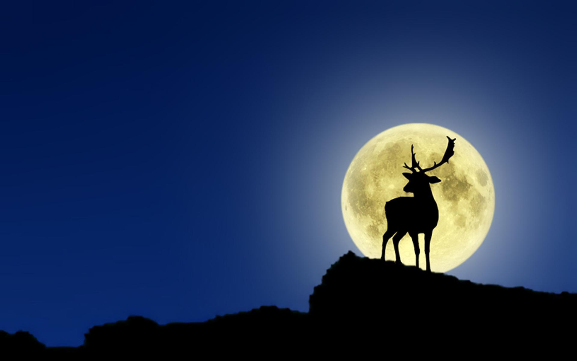 Животные животные олень луна 1920x1200