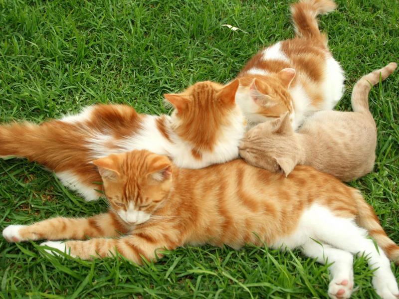 Кошка с котятами обои для рабочего стола, картинки, фото ...