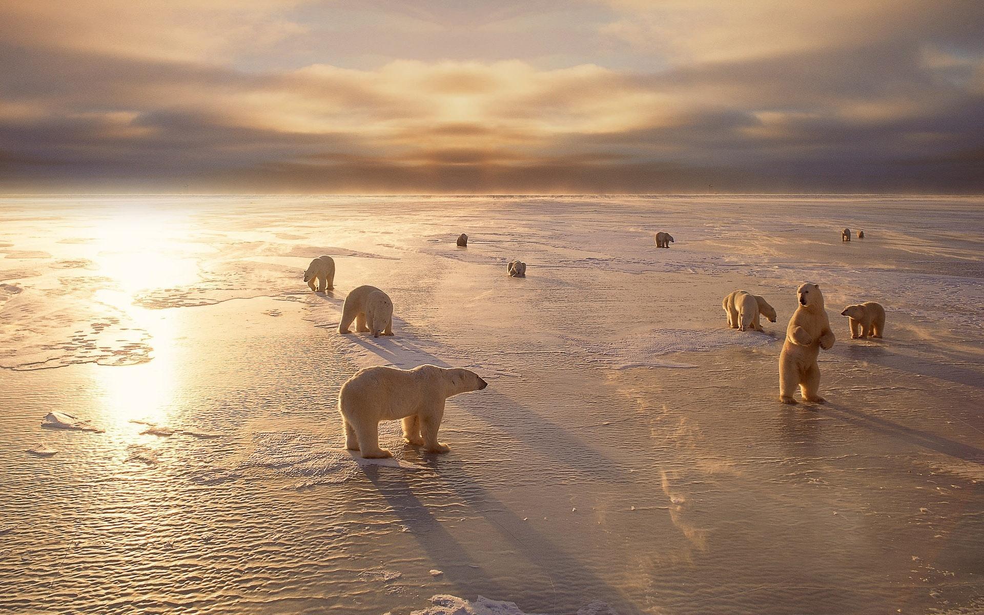 Животные север холод зима снег 1920x1200
