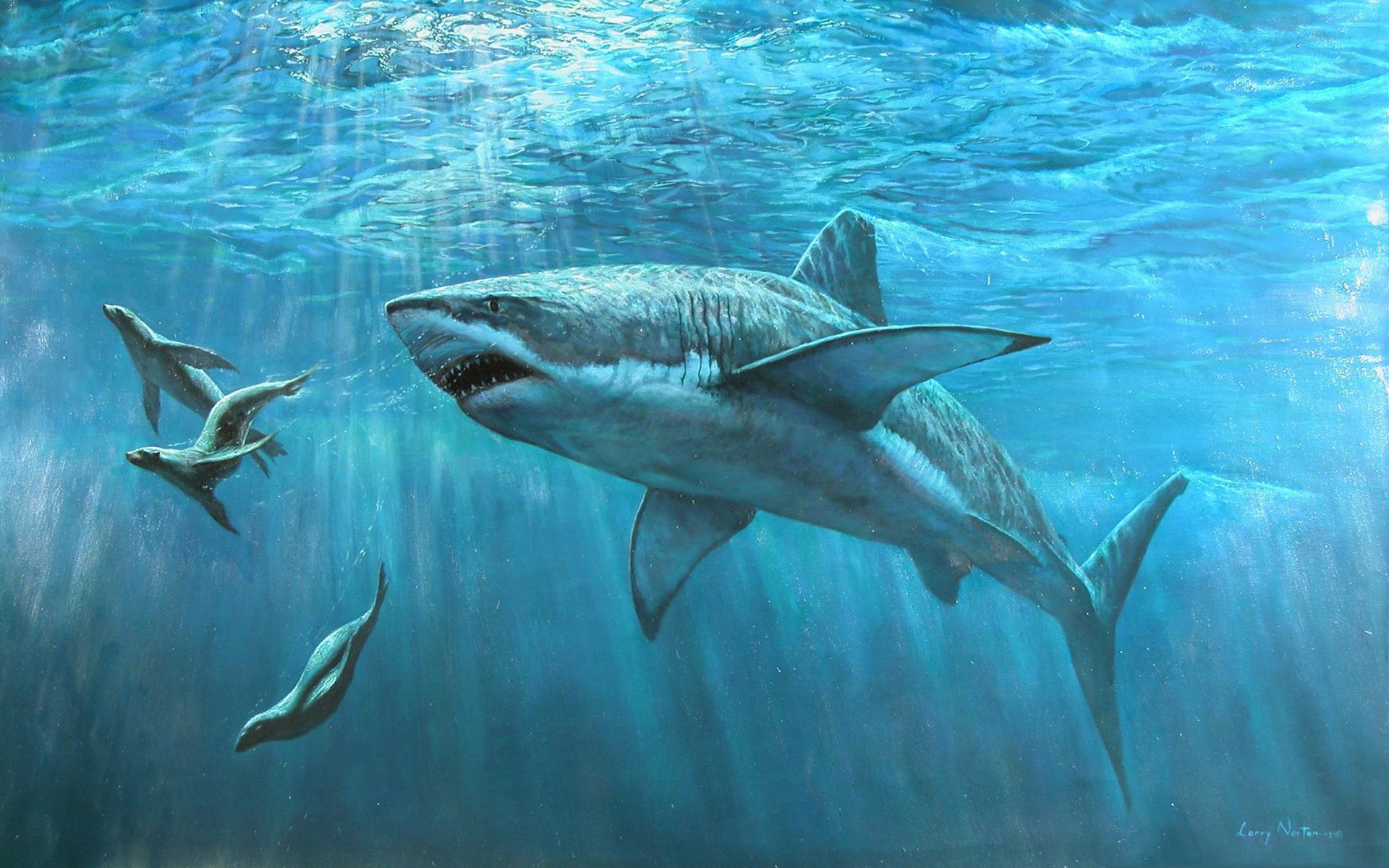 Морские котики подводный мир 1920x1200