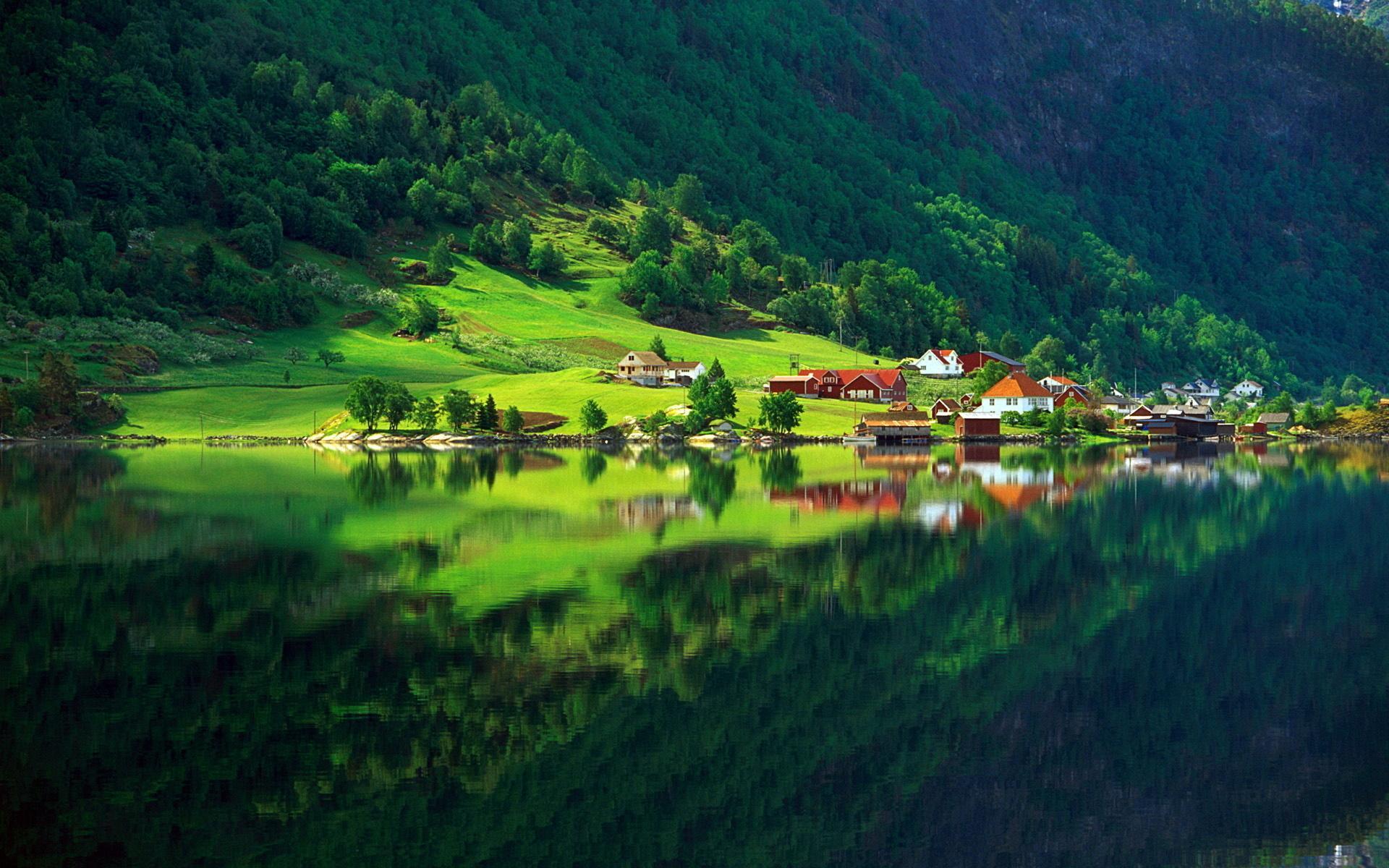 Природа природа лес зелень лето