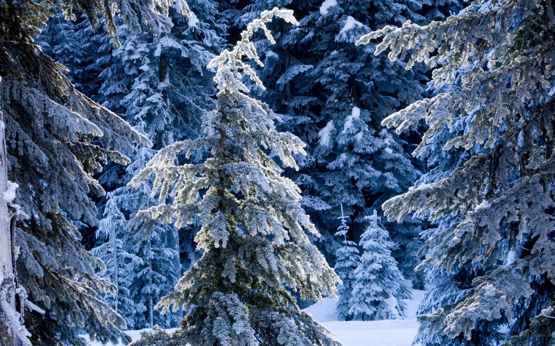Зима сказочный лес обои для рабочего