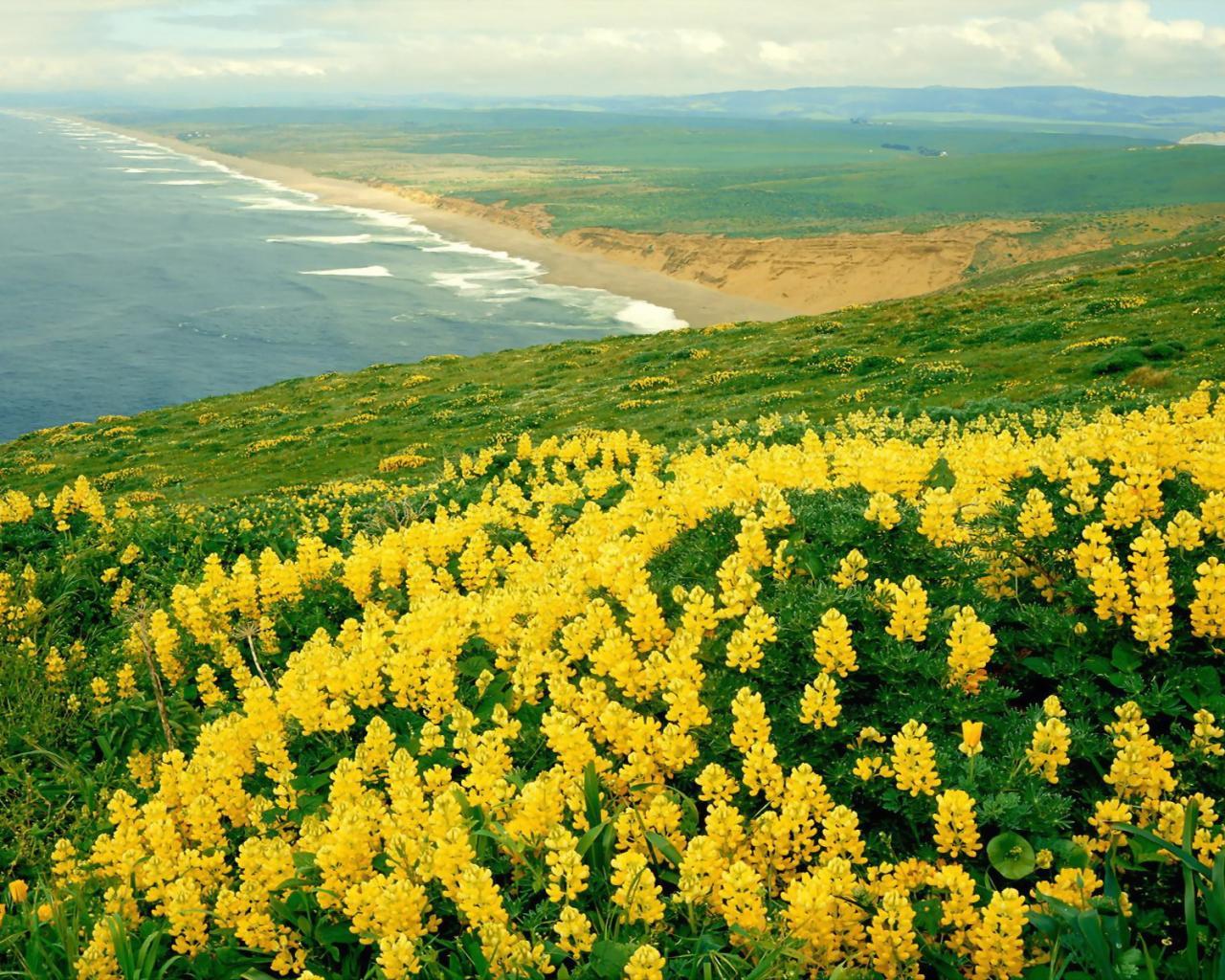 Природа панорама море цветы обои для