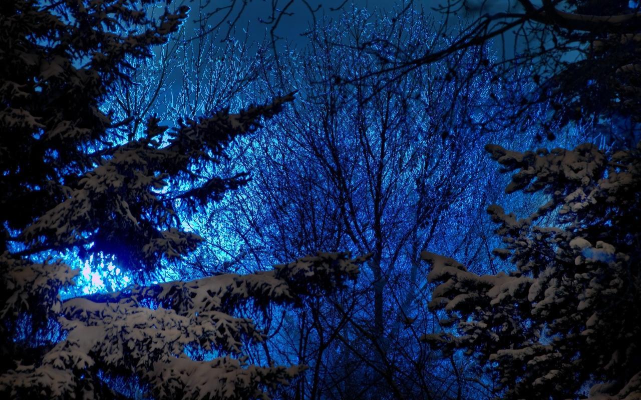 Обои природа природа лес ночь деревья