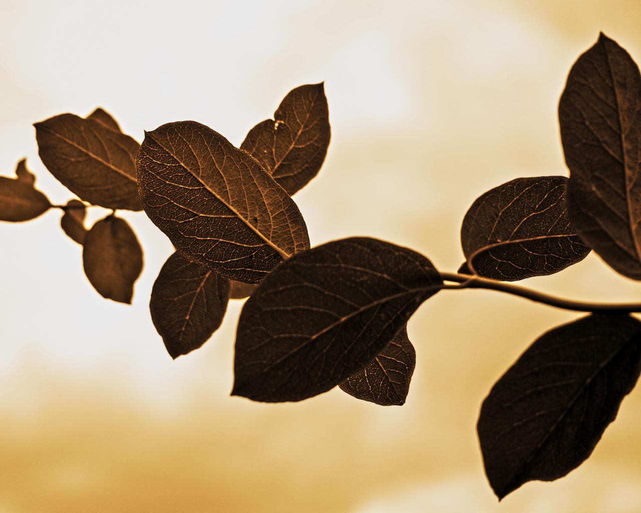 Природа дерево деревья макро листья