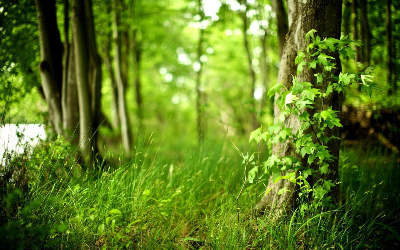 Листва свежесть трава жизнь 1280x800
