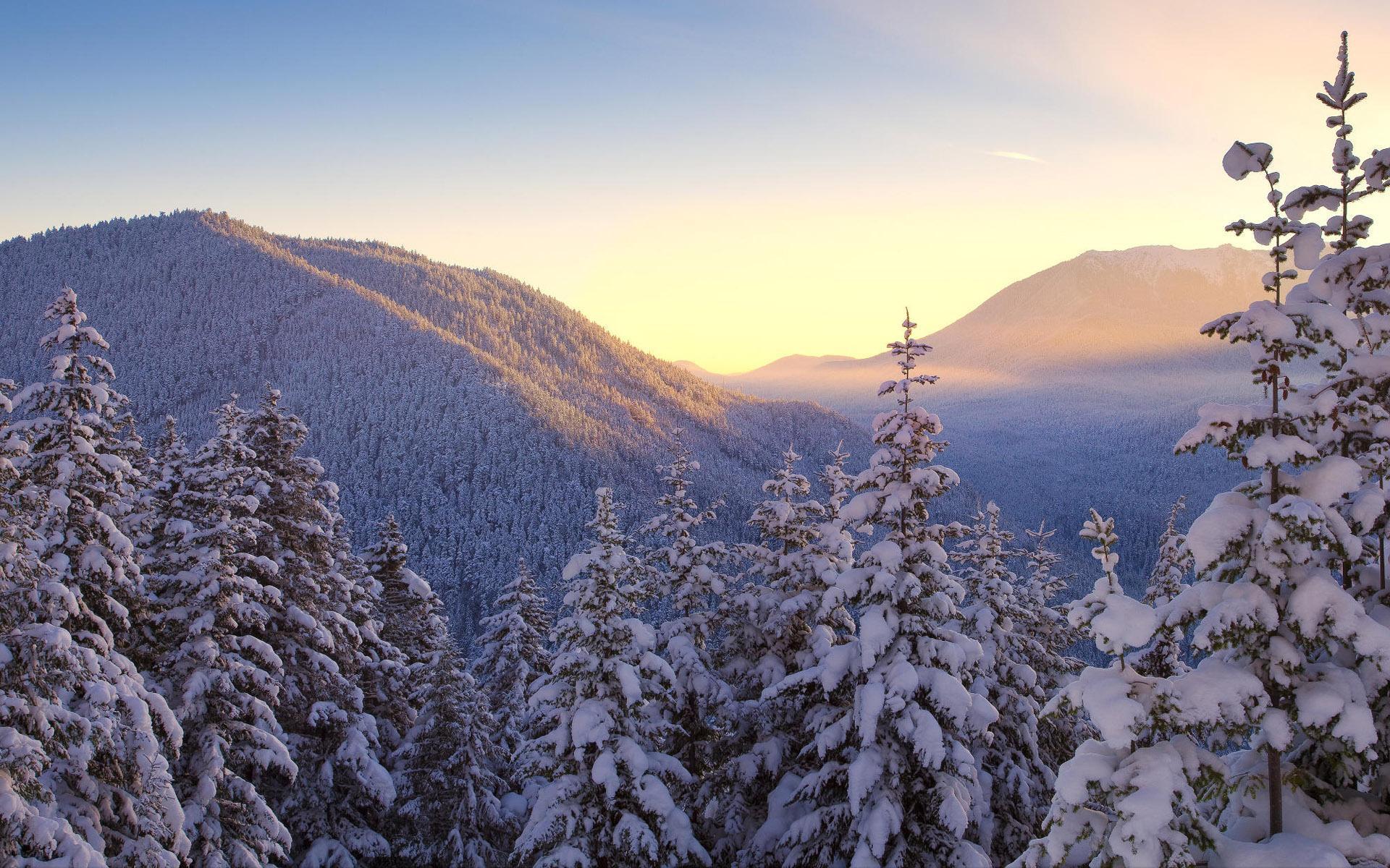 Деревья зимние красивые небо 1920x1200
