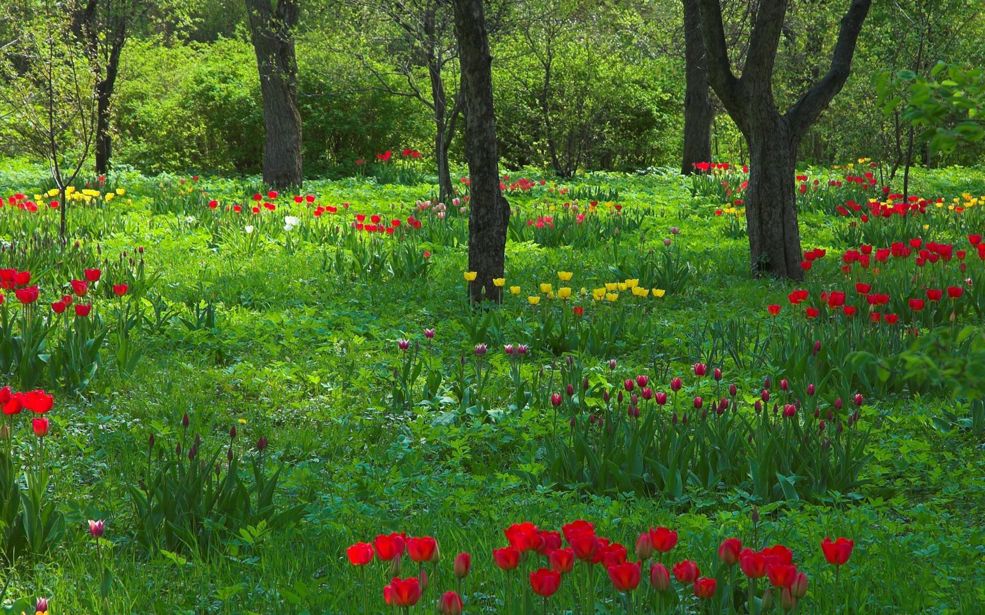 Деревья стволы весна сад природа