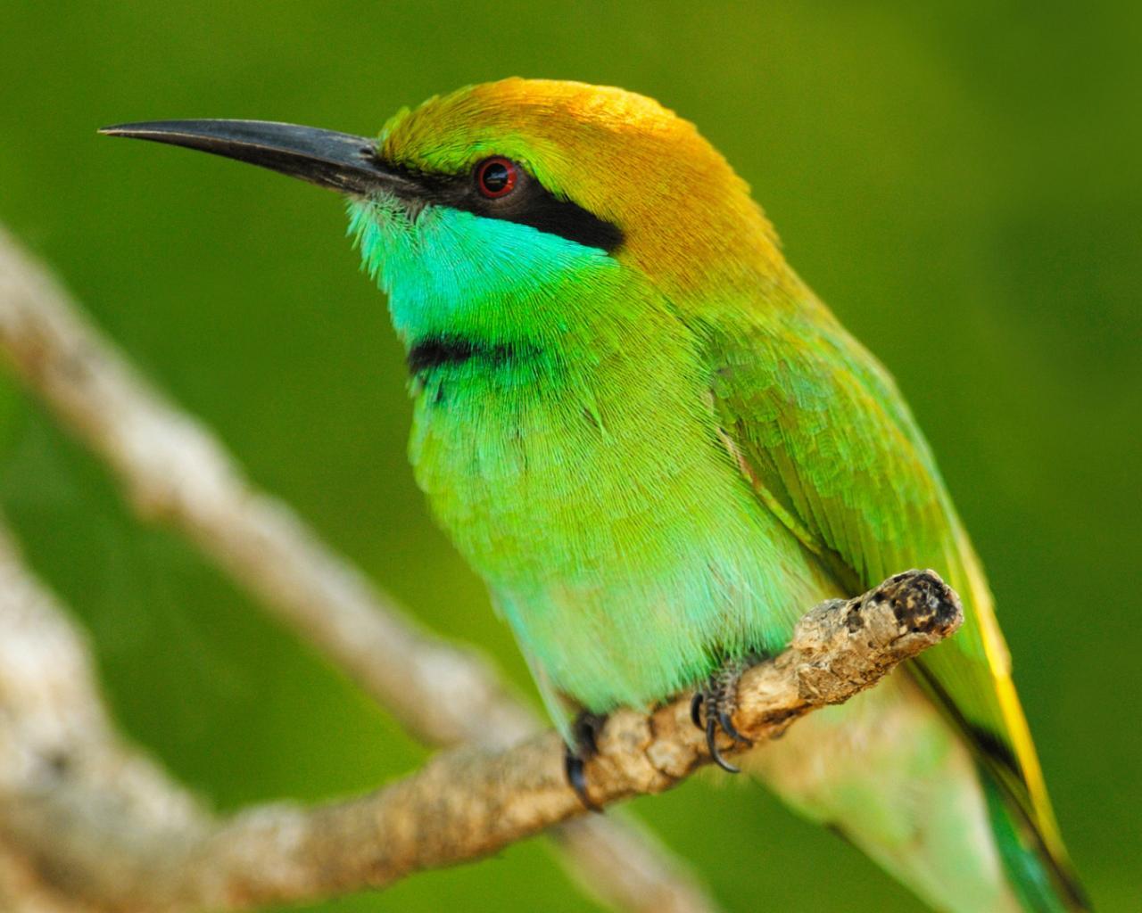 Животные животные птица оперение