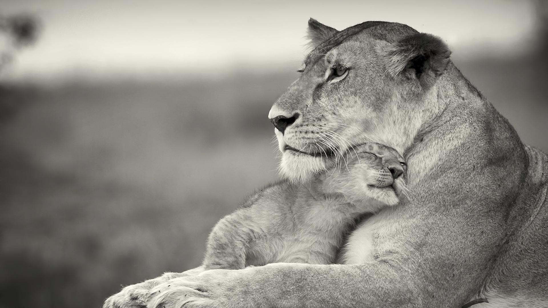 Картинка львица, хищники, кошки, львы, арт, лев 1920x1080, фото 81146 | 1080x1920