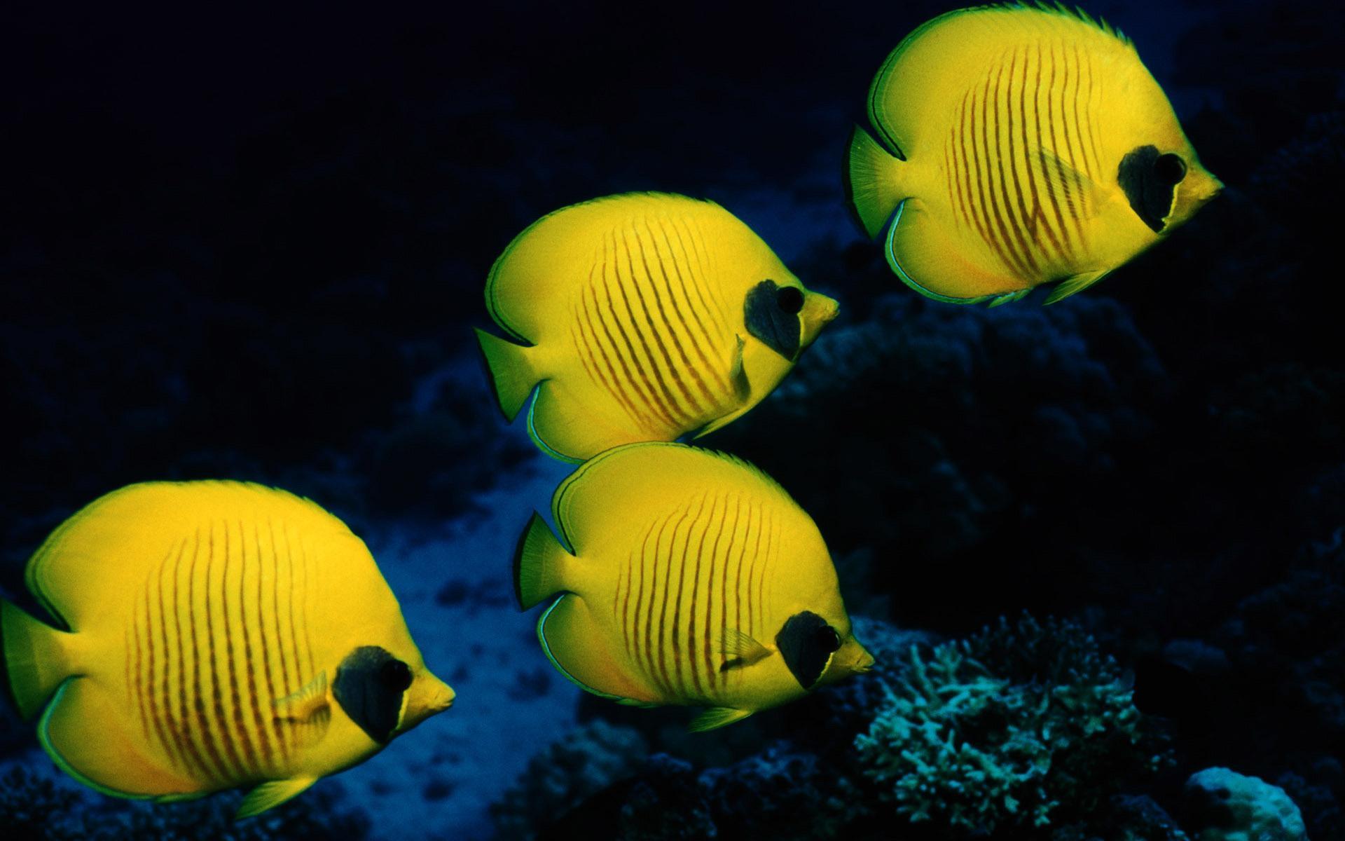 Рыбы рыбки море подводный мир обои