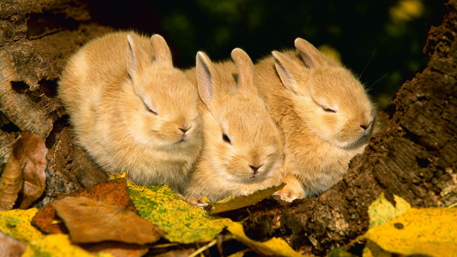 Животные осень картинки на рабочий стол