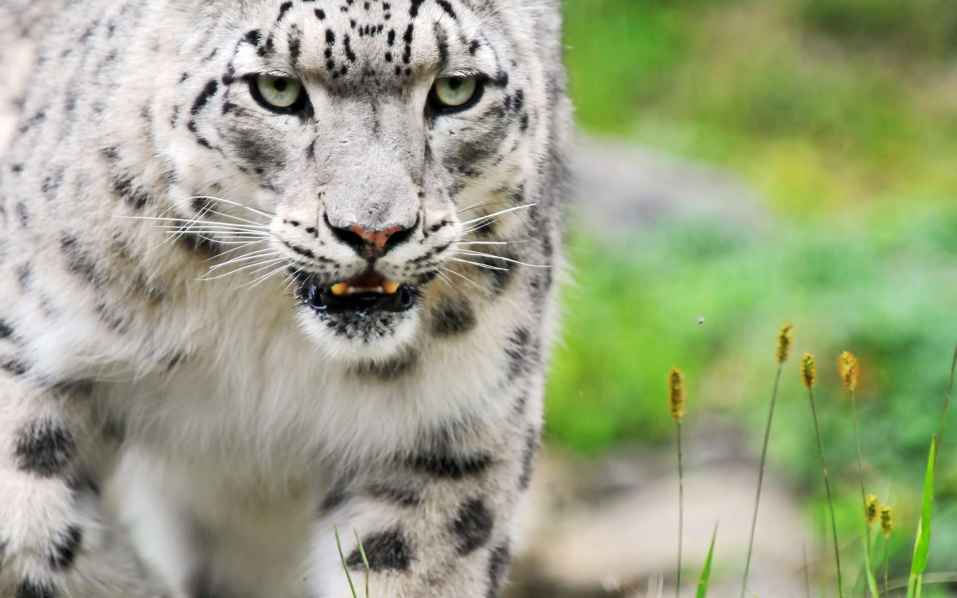 Животные животные кошка киса глаза