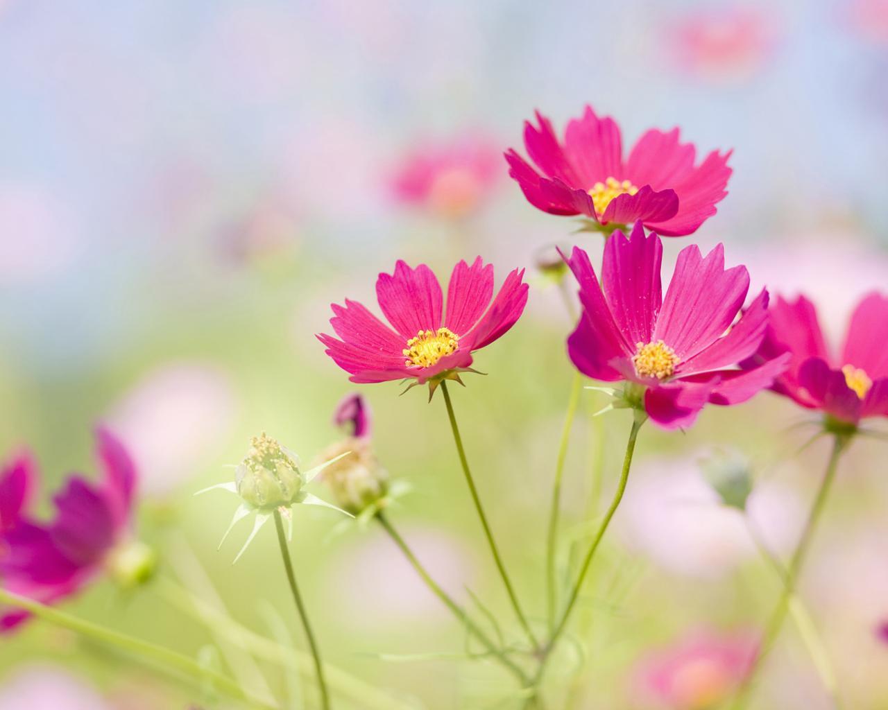 Обои цветы поляна луг цветы цветок