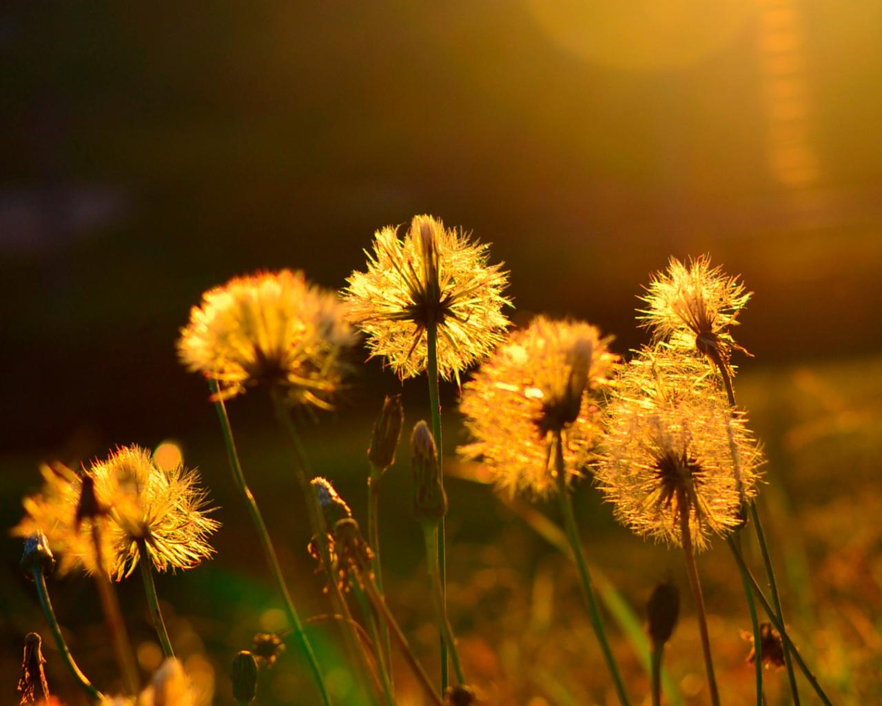 Лето солнце жара цветы макро