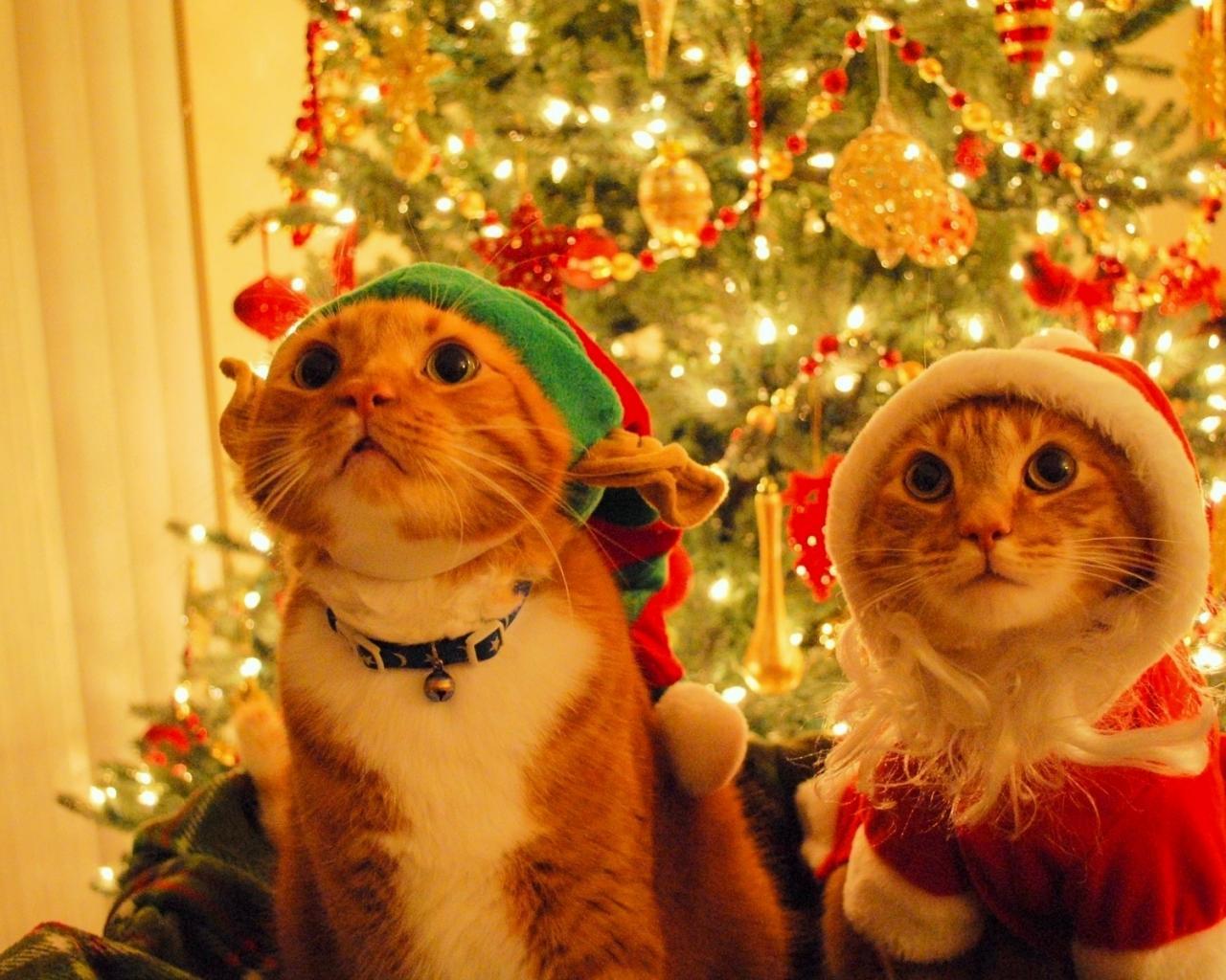 Картинки с котятами новый год на рабочий стол