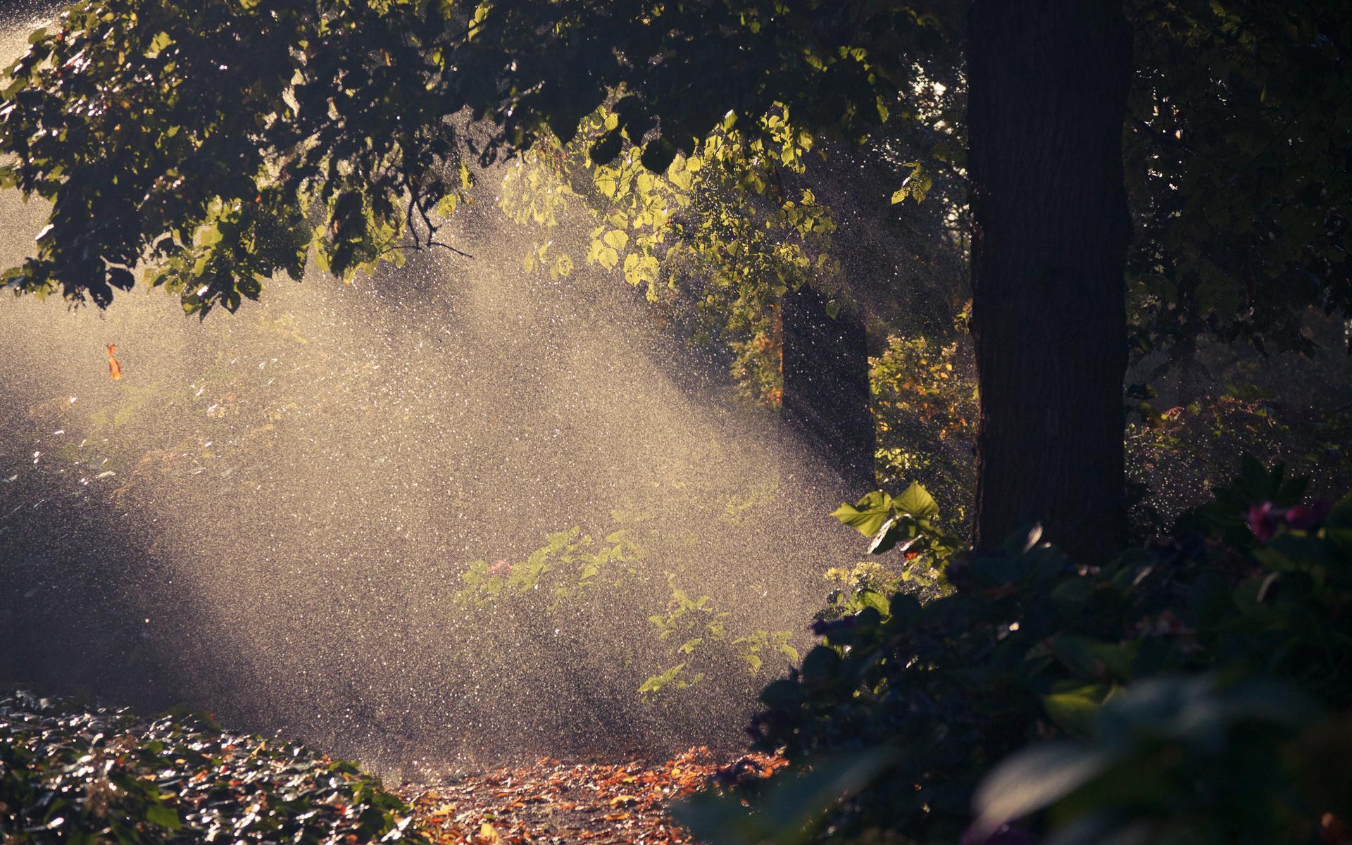 Обои дождь