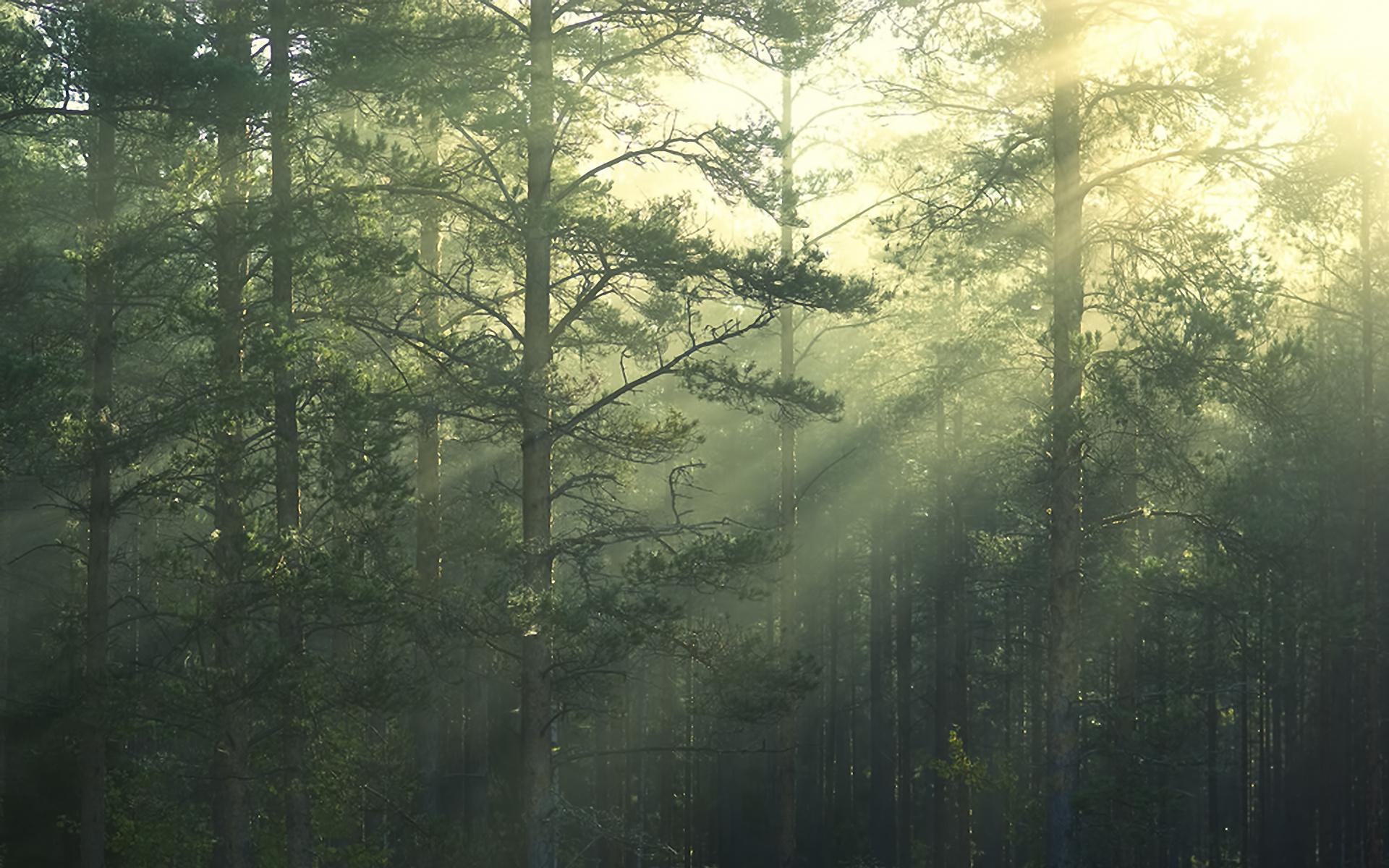 Картинки с природой леса