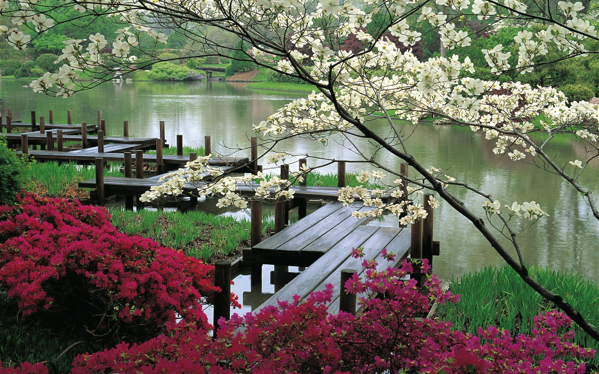 Япония сад цветы деревья вода река
