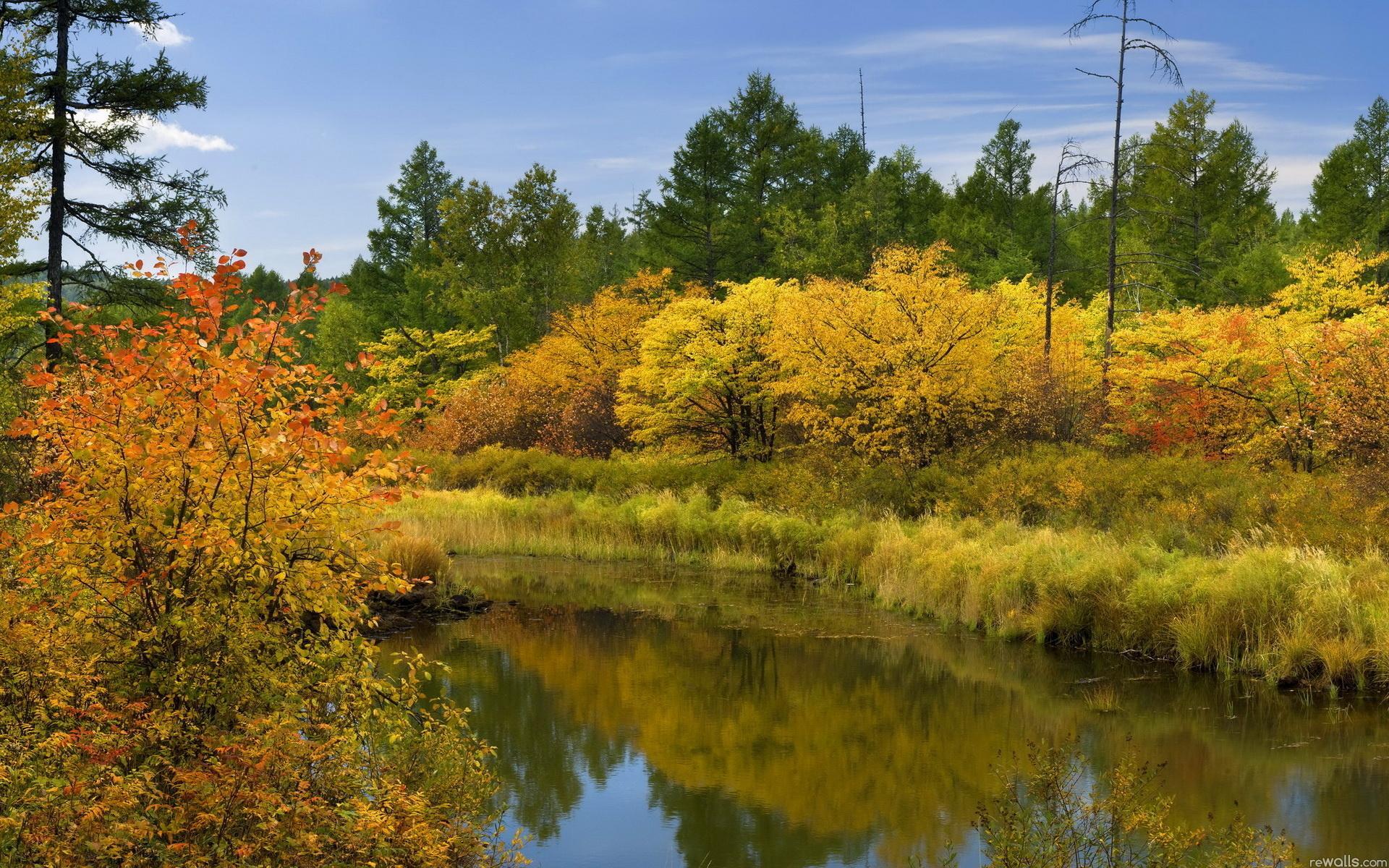 Обои природа река лес пейзаж природа