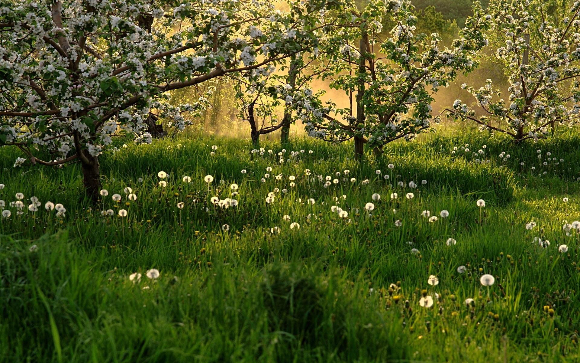 spring nature wallpapers 1080p - photo #6
