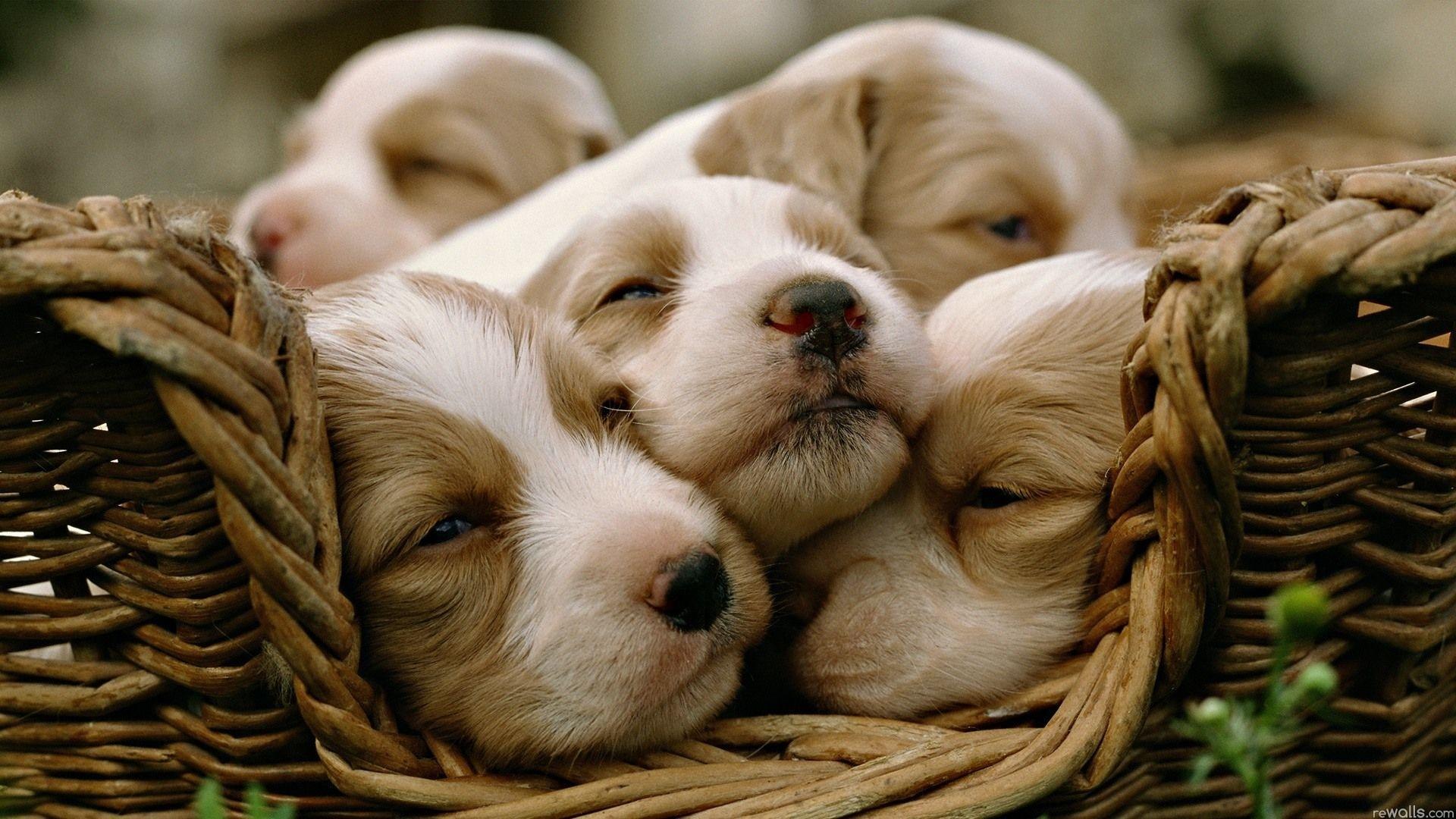 собаки на рабочий стол картинки