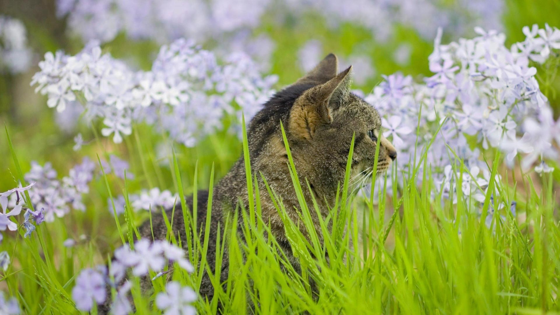 Кошка в траве и белых полевых цветах обои для рабочего ...