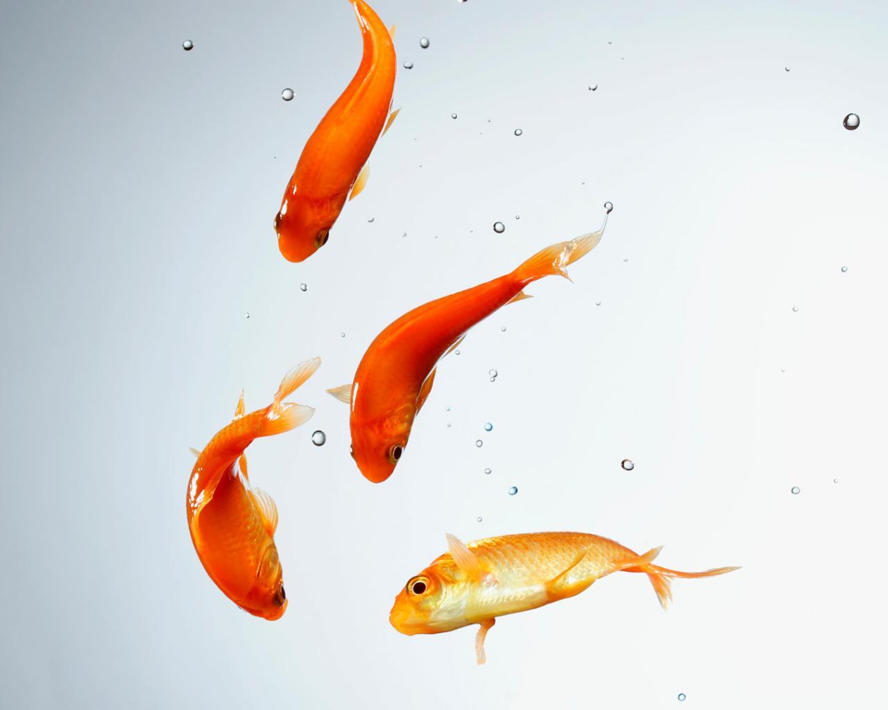 Рыбки вода аквариум золотая рыбка