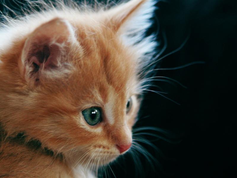 Кот глаза взгляд красота обои для