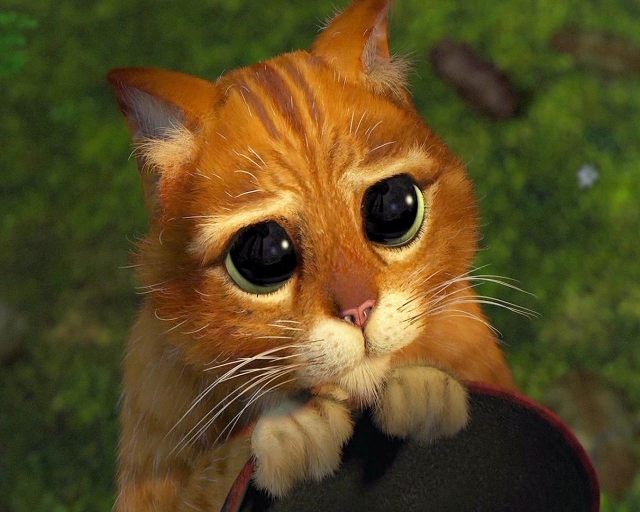 Кот рыжий шрэк кот в сапогах обои для