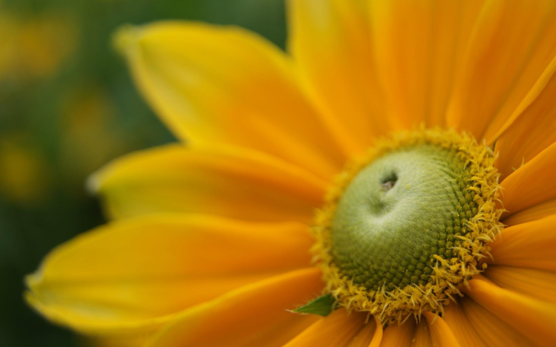 Цветы цветы макро графии для рабочего