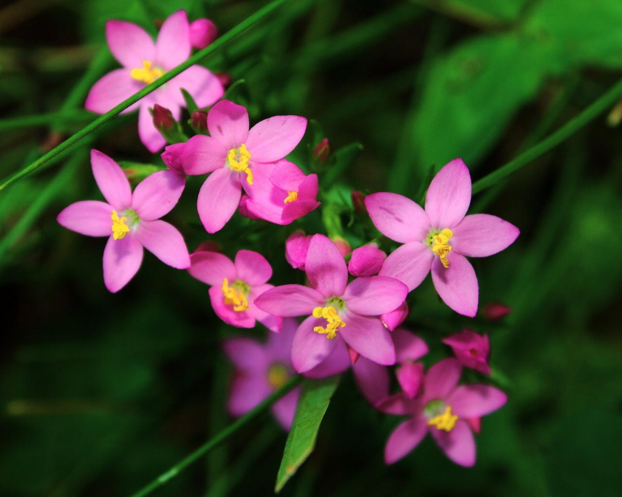 Обои цветы цветы макро природа лес