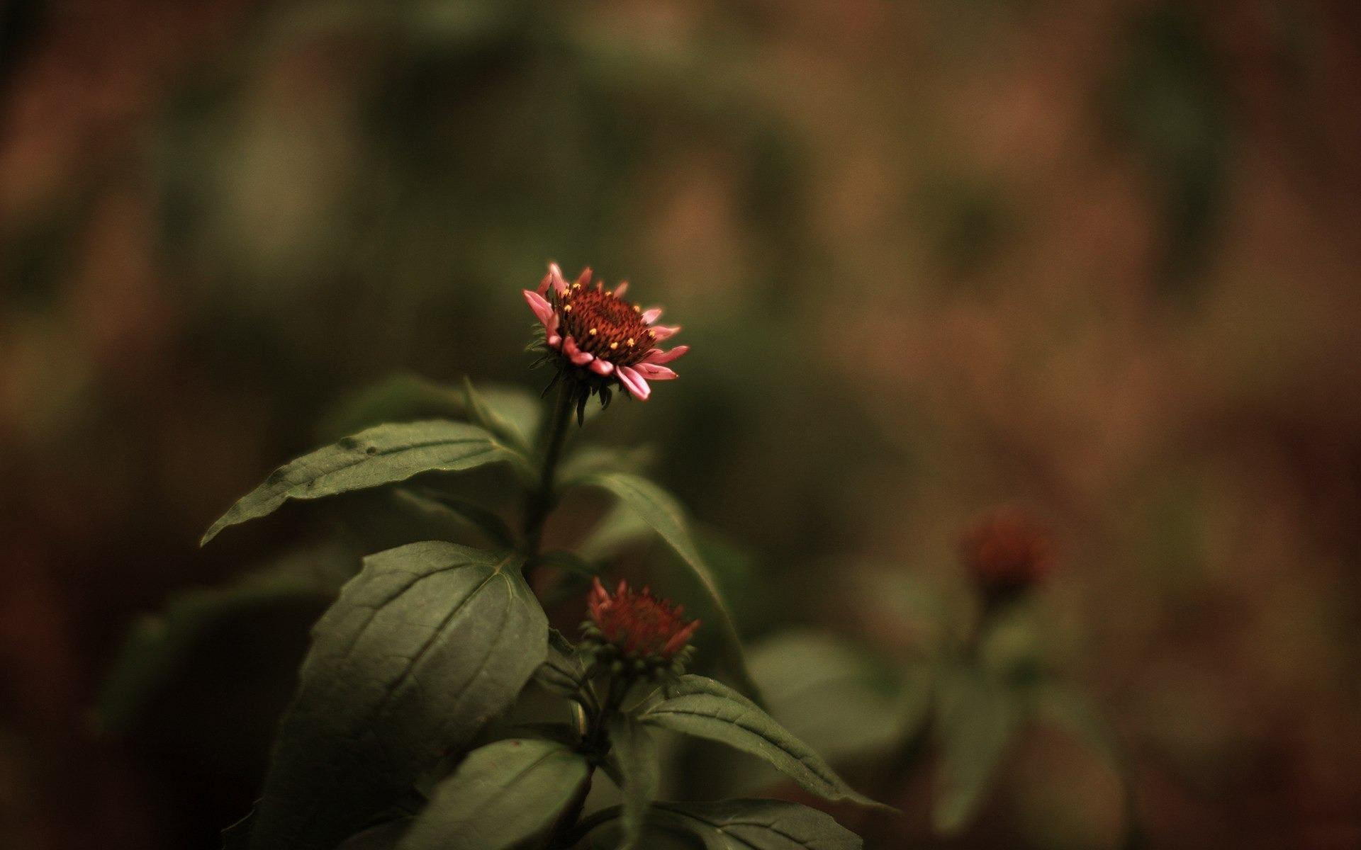 Изображение цветов на рабочий