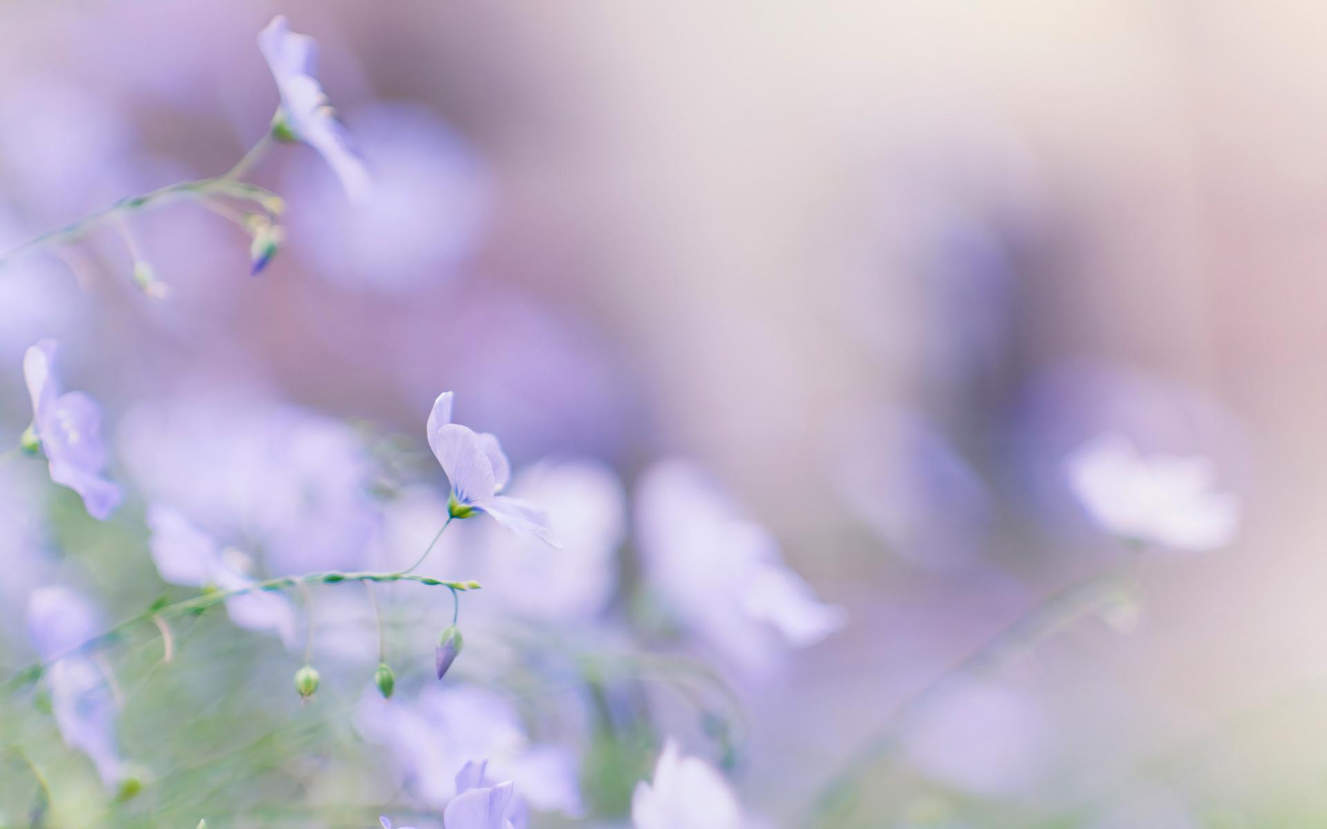 нежность цветы фото: