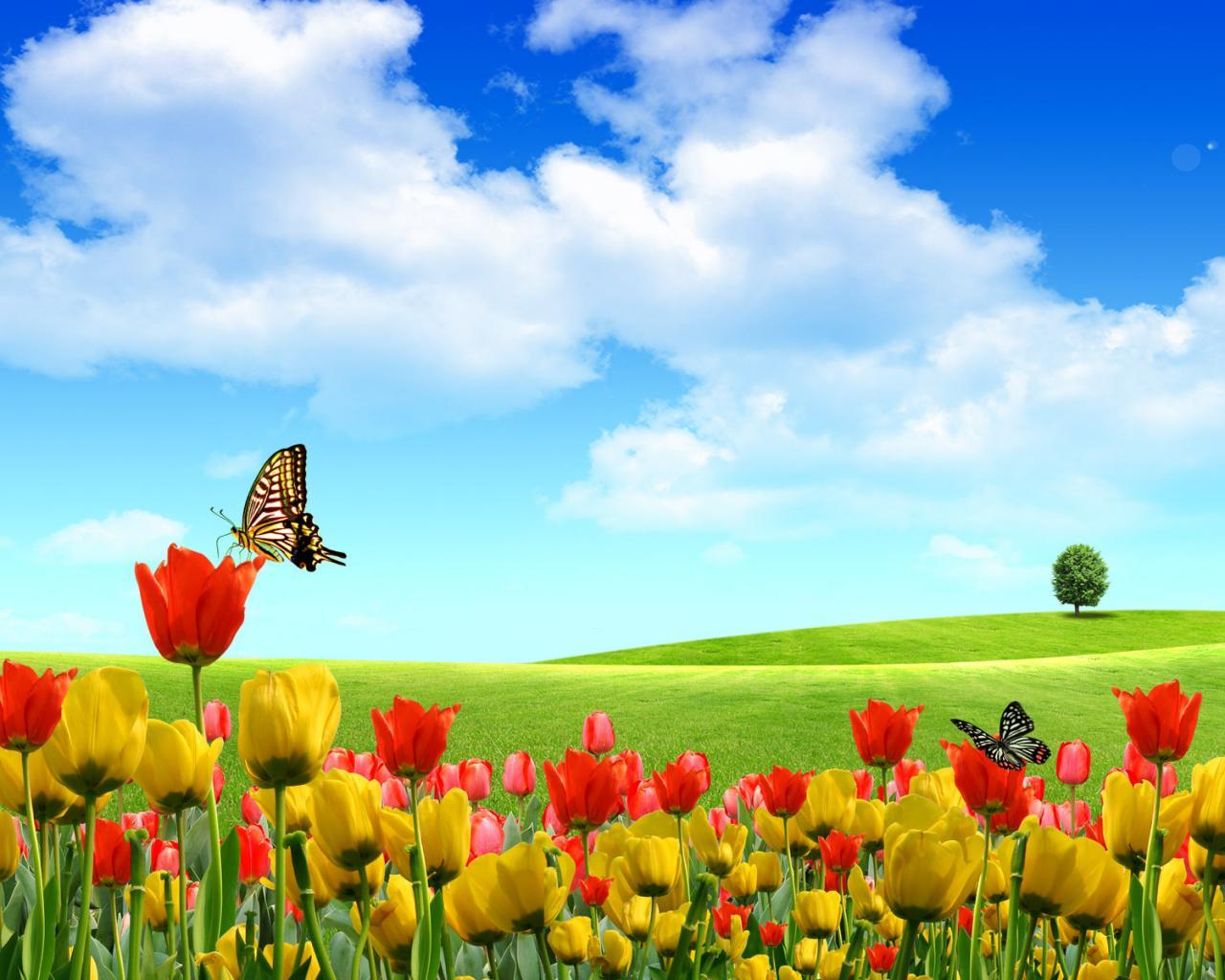 Небо бабочки тюльпаны цветы 1280x1024