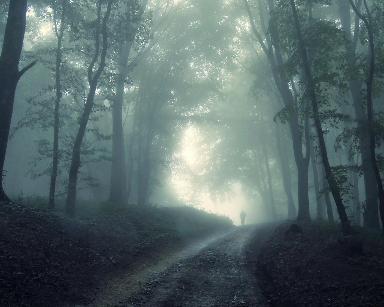 Лес туман деревья дорога обои для