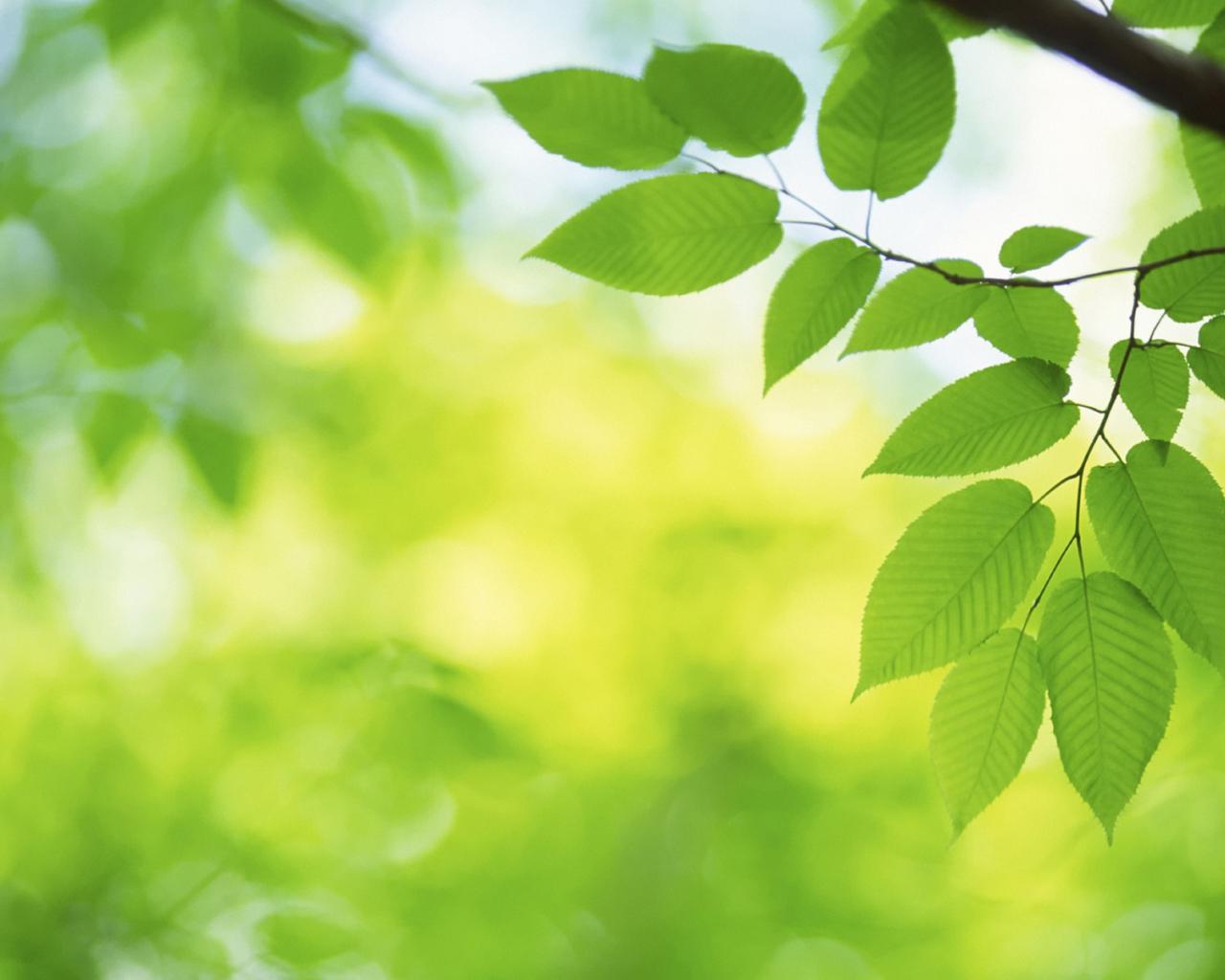Листья зелень обои для рабочего стола