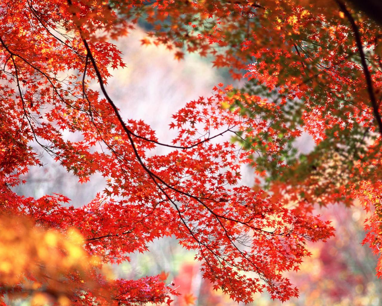 Оранжевые деревья ветки осень 1280x1024