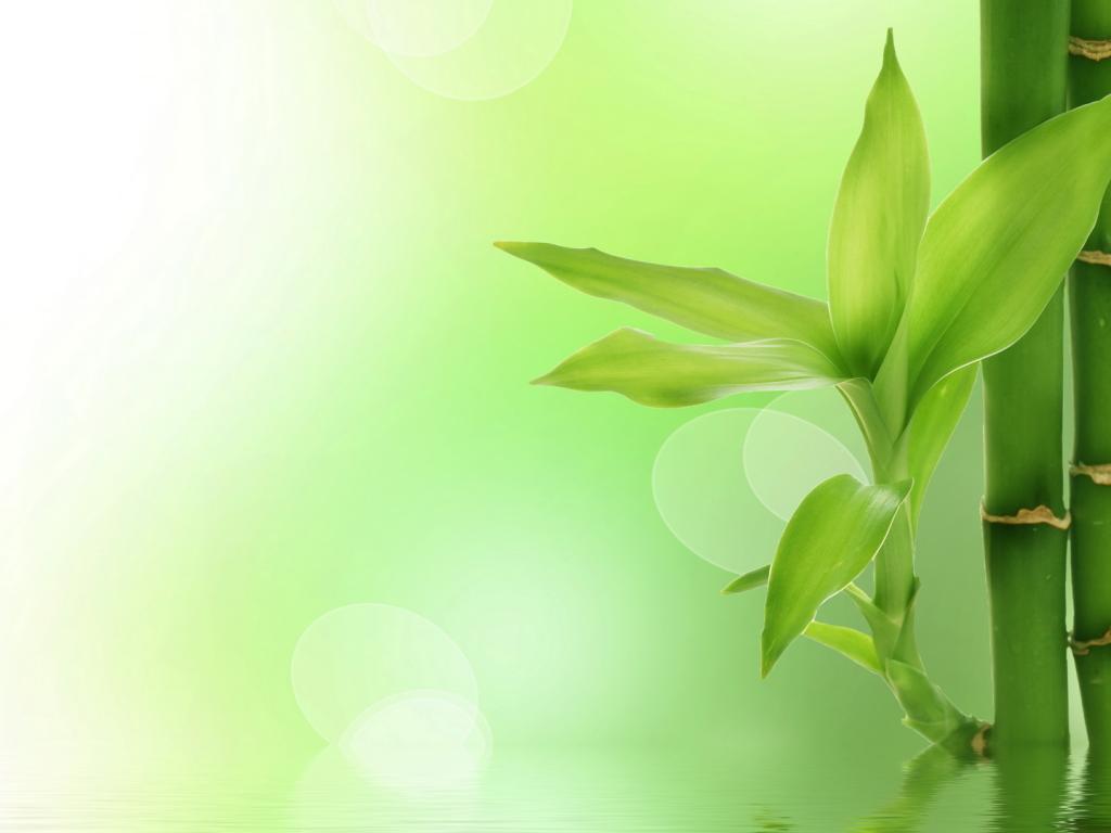 Природа пейзаж бамбук листья вода