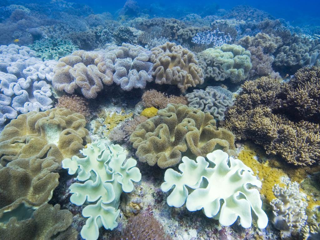 Коралл океан подводный мир обои для