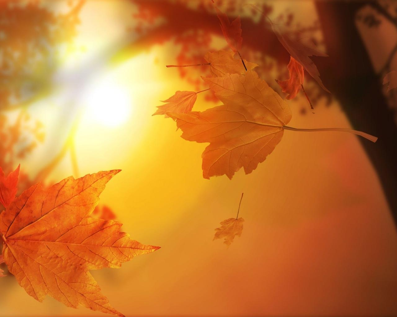 Осень листья свет солнце обои для