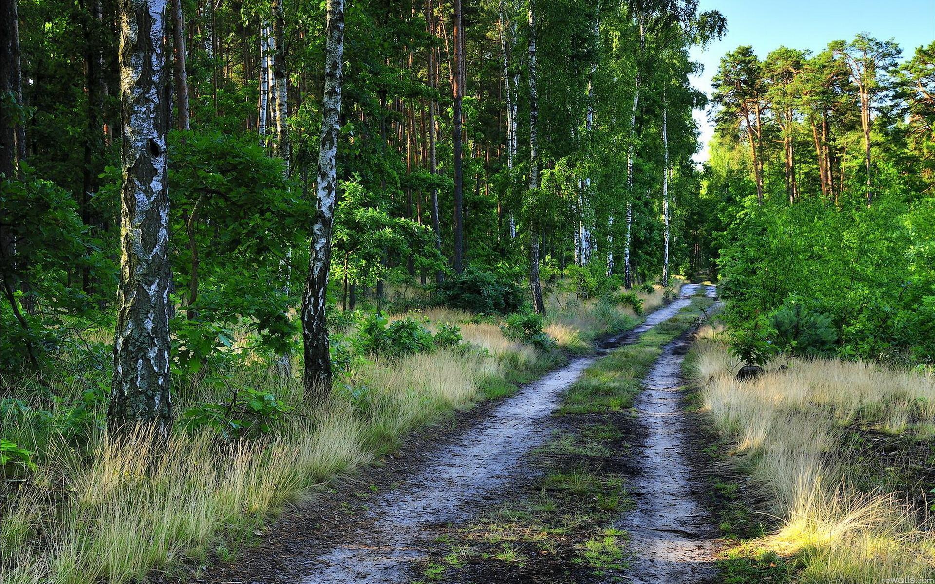 фото лес природа