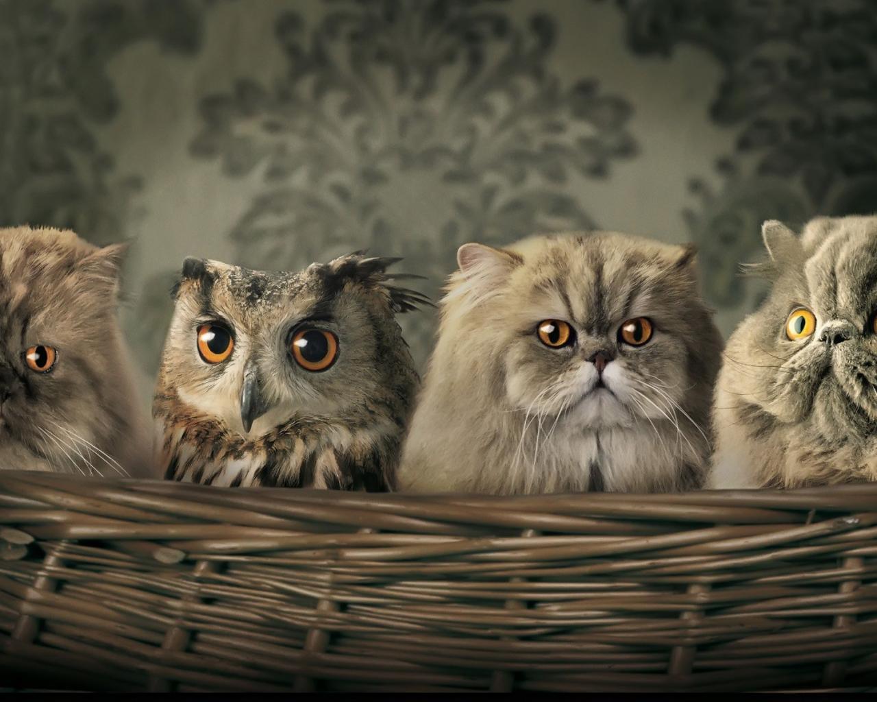 скачать смешные картинки с животными: