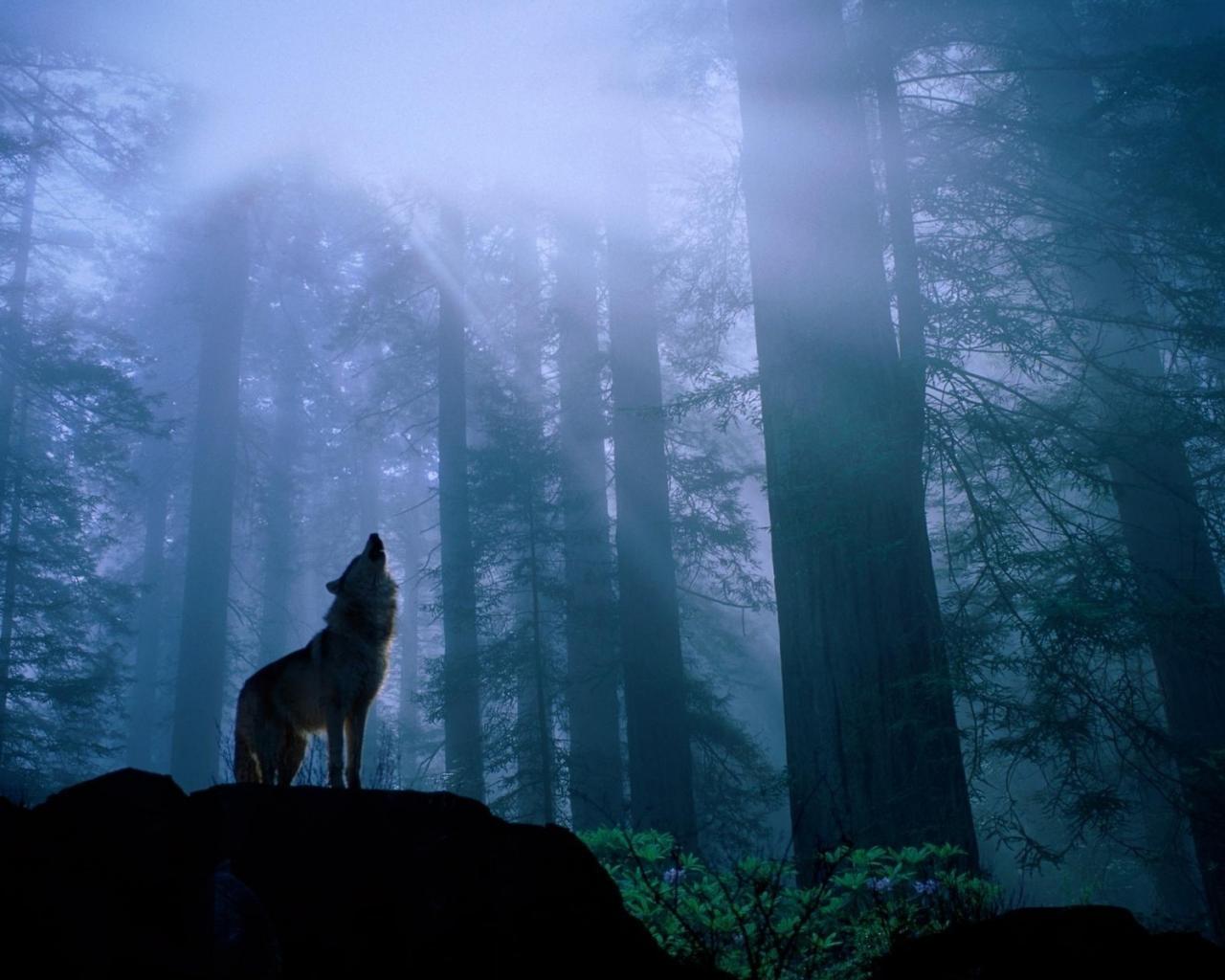 скачать картинку волк из ну погоди