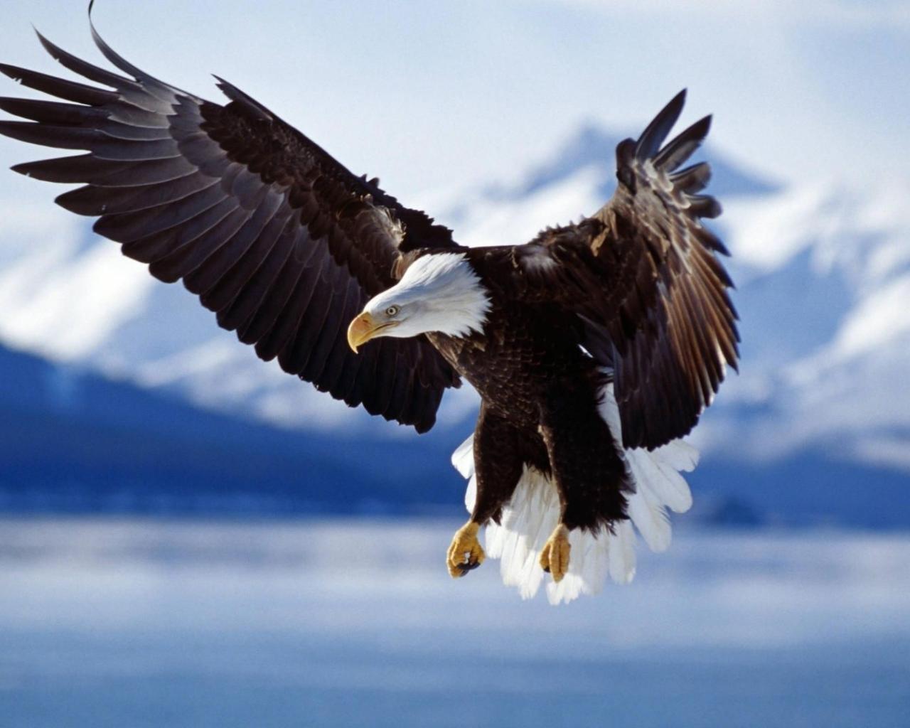 Обои животные животные орел 1280x1024