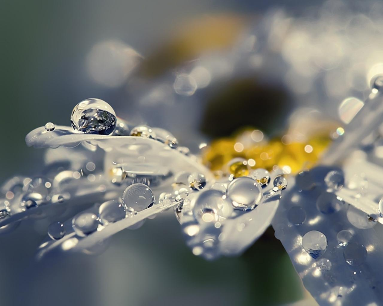 Смс картинки цветы 4